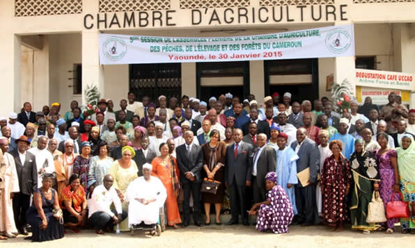 Cameroun agriculture la chambre d - Chambre d agriculture 24 ...